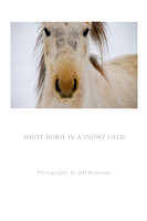 "White Horse in a Snowy Field (Prints from $35 to $110) Click ""add to cart"" for price list"
