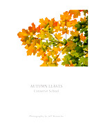 Autumn Leaves: Conserve School