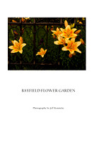 "Bayfield Flower Garden (Prints from $35 to $110) Click ""add to cart"" for price list"